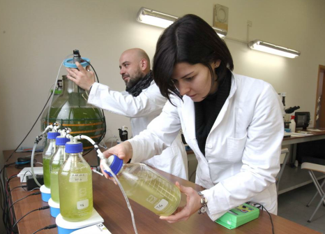 "Establishment of third generation algae biofuels and bioplastics production in ""Mogilev"" FEZ"